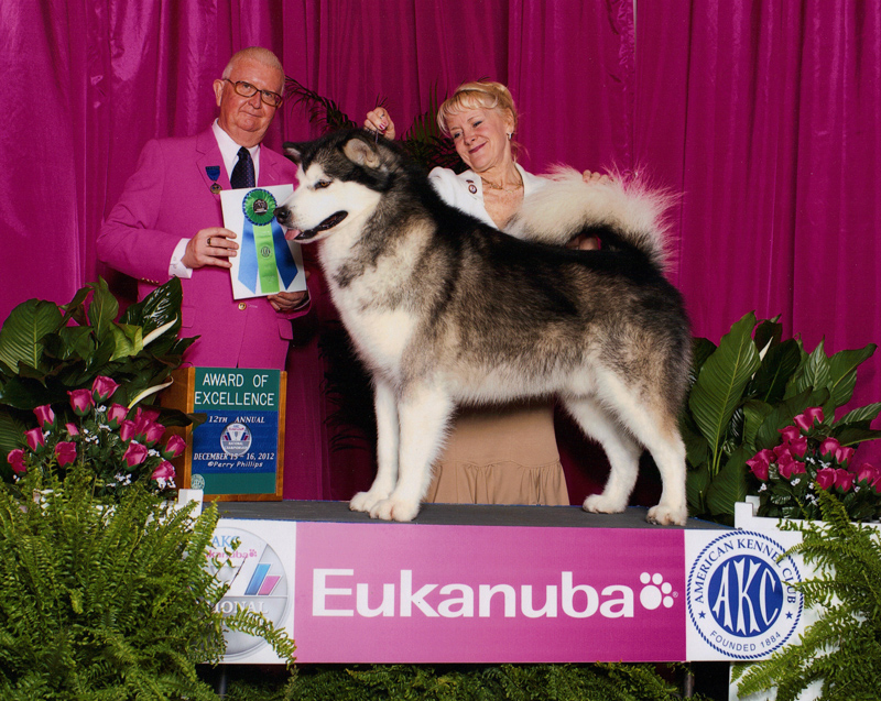 Eukanuba Award of Excellence December 2012.