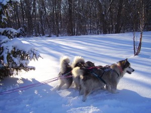 Winward's Flint Mushing