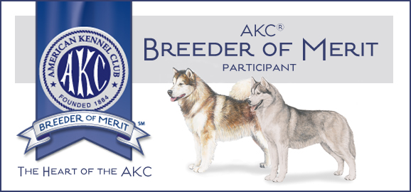 AKC Breeder of Merit Winward Malamutes and Siberian Huskies