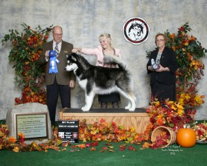 Trix 1st Bred by Exhibitor