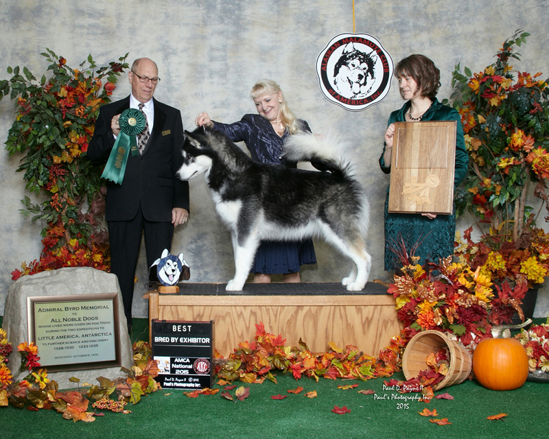 Trix Best Bred by Exhibitor