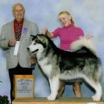 Flint, Grand Champion, Nashville Kennel Club, 2012