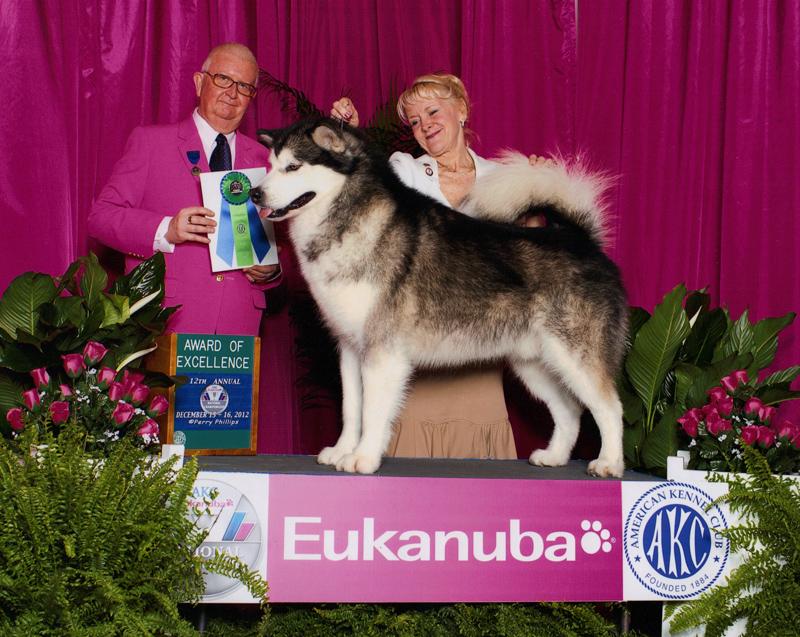 Eukanuba Award of Excellence December 2012.